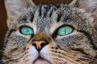 Conferència al Col·legi sobre el benestar dels gats, el dimecres 8 de maig