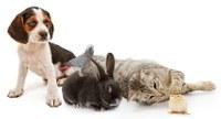 El debat sobre la rebaixa de l'IVA veterinari posa de manifest la importància del sector davant el Congrés