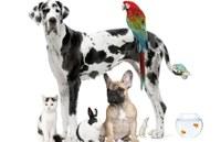 Es poden deprimir els animals de companyia després de les vacances?