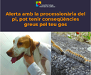 Informe - Compte! La processionària del pi pot tenir conseqüències greus pel teu gos