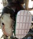 """Jornada PATT a la Seu d'Urgell """"Lesions, tractaments i prevenció podal en vaques de llet"""", el dijous 30 de novembre"""