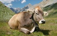 """Jornada PATT a la Seu d'Urgell sobre """"Previsió sobre el complex respiratori boví. Què hi ha de nou?"""", el 14 de novembre"""