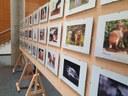 """L'exposició itinerant del concurs de fotografia """"La Meva Mascota"""", fins al 27 de maig a la UdL"""