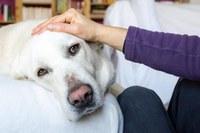 La 'grip canina', encara que no afecta els humans, s'assembla en els símptomes i el tractament