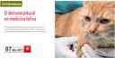 """Seminari online del COVLL el 7 de març sobre """"El derrame pleural en medicina felina"""" amb places gratuïtes"""