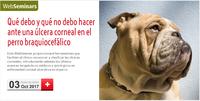 """WebSeminar """"Qué debo y qué no debo hacer ante una úlcera corneal en el perro braquiocefálico"""", el 3 d'octubre amb places gratuïtes"""