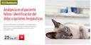"""WebSeminar """"Analgèsia en el pacient felí: identificació del dolor i opcions terapèutiques"""", el 25 de setembre"""