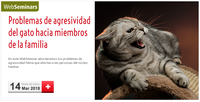 """WebSeminar (COVLL-Asís) """"Problemas de agresividad del gato hacia miembros de la familia"""", el 14 de març amb places gratuïtes"""