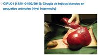 """Curs Online del Consejo sobre """"Cirugía de Tejidos Blandos en Pequeños Animales"""", del 13 de gener a l'1 de febrer"""